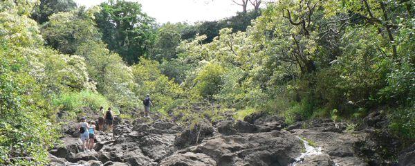 Maui Bamboo Hike
