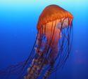 Underwater Hazards